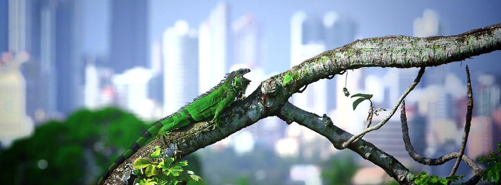 Iguanas a la carta
